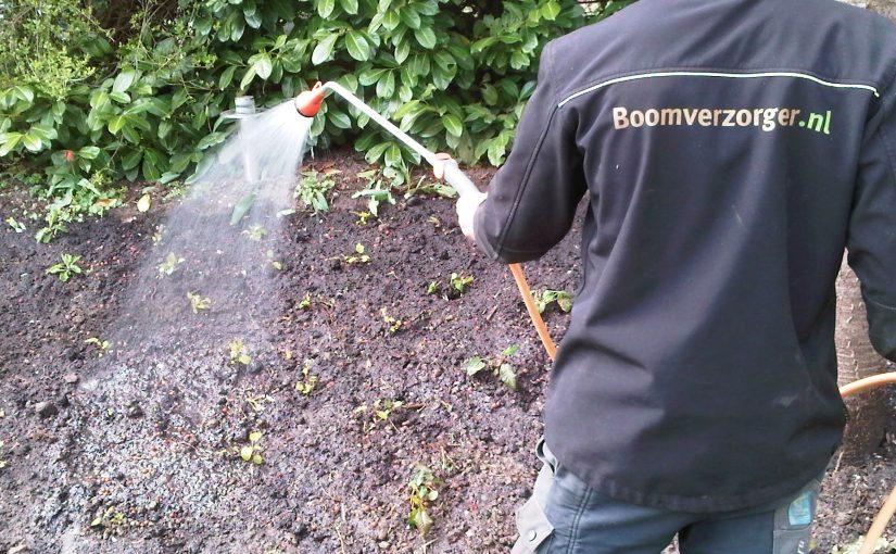 Tijd Voor Tuin : Stichting tijd weer fruitbomen geplant in le roy tuin